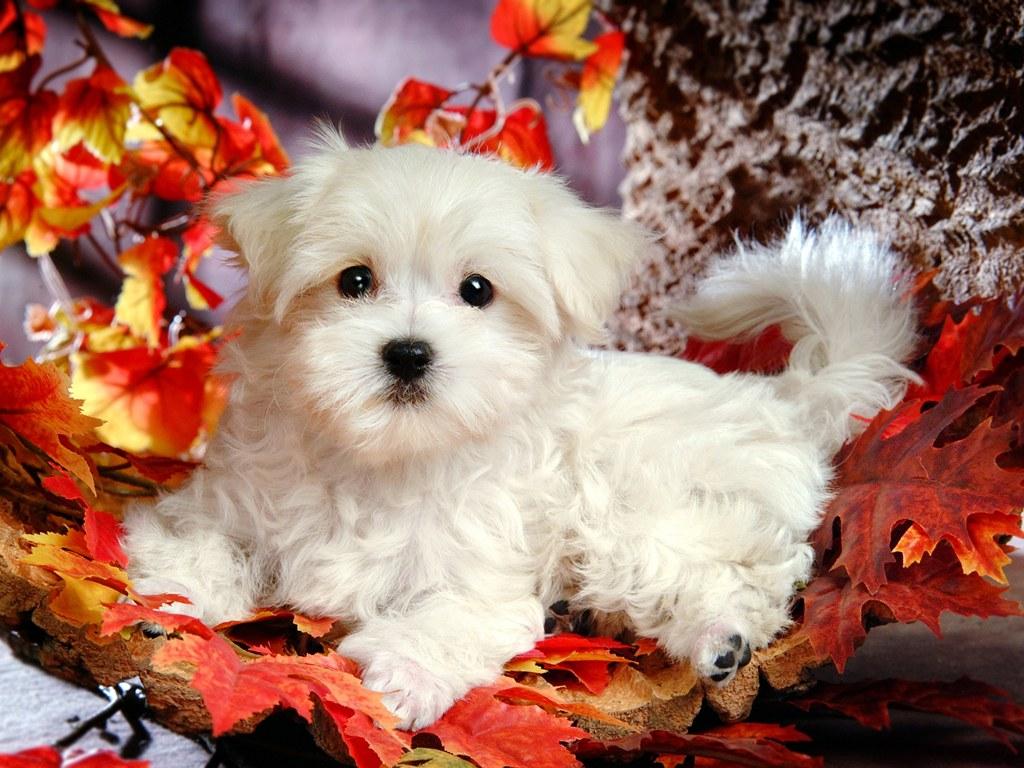 http://2.bp.blogspot.com/-CkMcNd7qI5g/T3wUbbJOXqI/AAAAAAAABrU/gKXEisKkMHk/s1600/white-fluffy-puppy-508-2.jpg
