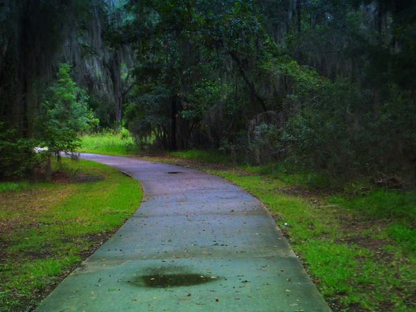 jekyll island, bicycle paths, paved bicycle path, dearmissmermaid.com