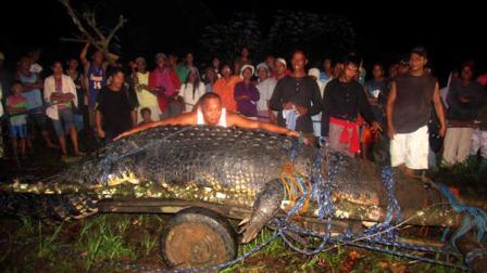 crocodile gustave, giant crocodile, giant crocodile dinosaur, giant prehistoric crocodile, giant saltwater crocodile