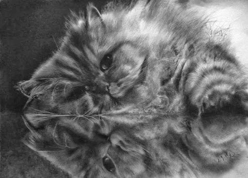 03--Hyper-realistic-Cats-Pencil-Drawings-Hong-Kong-Artist-Paul-Lung-aka-paullung-www-designstack-co