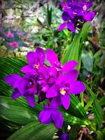 Sekelompok Bunga Setenang Kampung Halaman