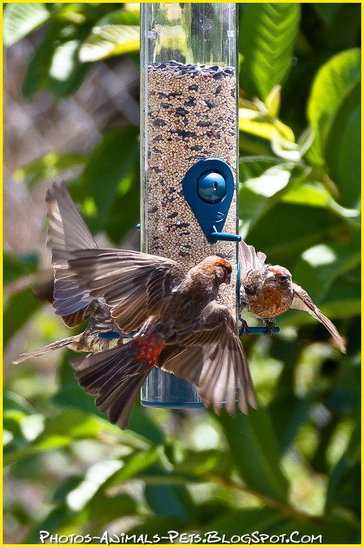 http://2.bp.blogspot.com/-ClWOCPlHAn0/Tt-UCLT8ZVI/AAAAAAAAClI/MdPtuYXfdF0/s1600/bird%2Bpictures%2B.jpg