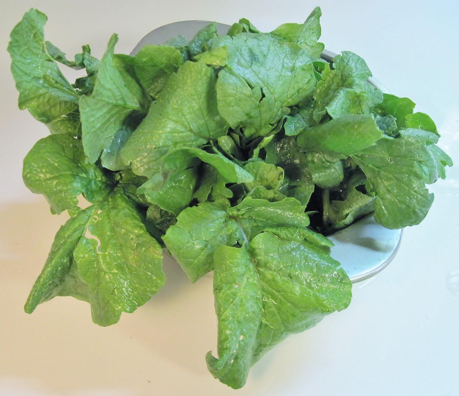 Radish greens radish greens are perfectly edible with a slightly