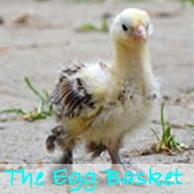 Visit our Website ~The Egg Basket