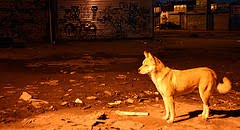 Willets Point Watchdog