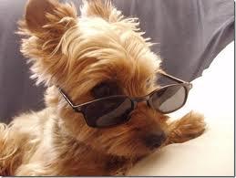 Blog de Perros Miniaturas: Educar a los perros miniatura