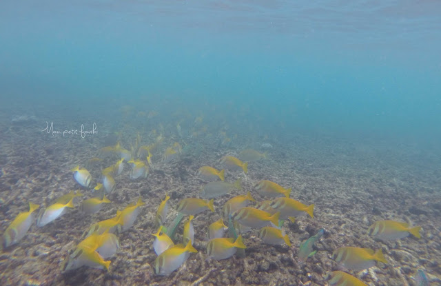 Photo GoPro extraite d'une session snorkelling sur l'île de Ko Tao