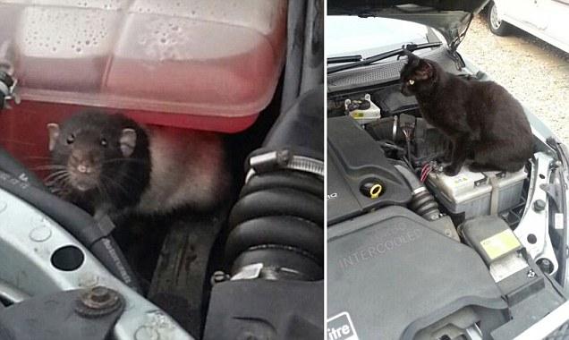 Me paso a las 4 ruedas!: Seat 1500 Y+el+gato+dijo+no+estoy+interesado+y+el+perro+ni+lo+penso+%282%29