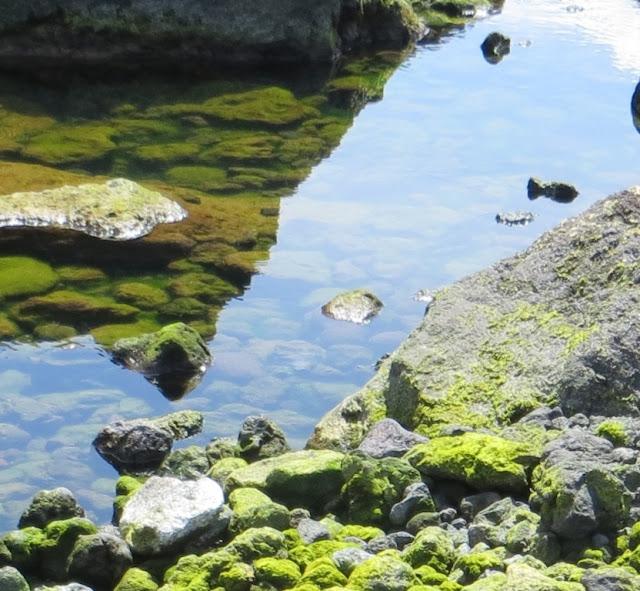 """Ampliação de fotografia da """"Fonte das Pombas"""" zona balnear dos Biscoitos, reflexo na água do mar, pedras algas e musgo"""