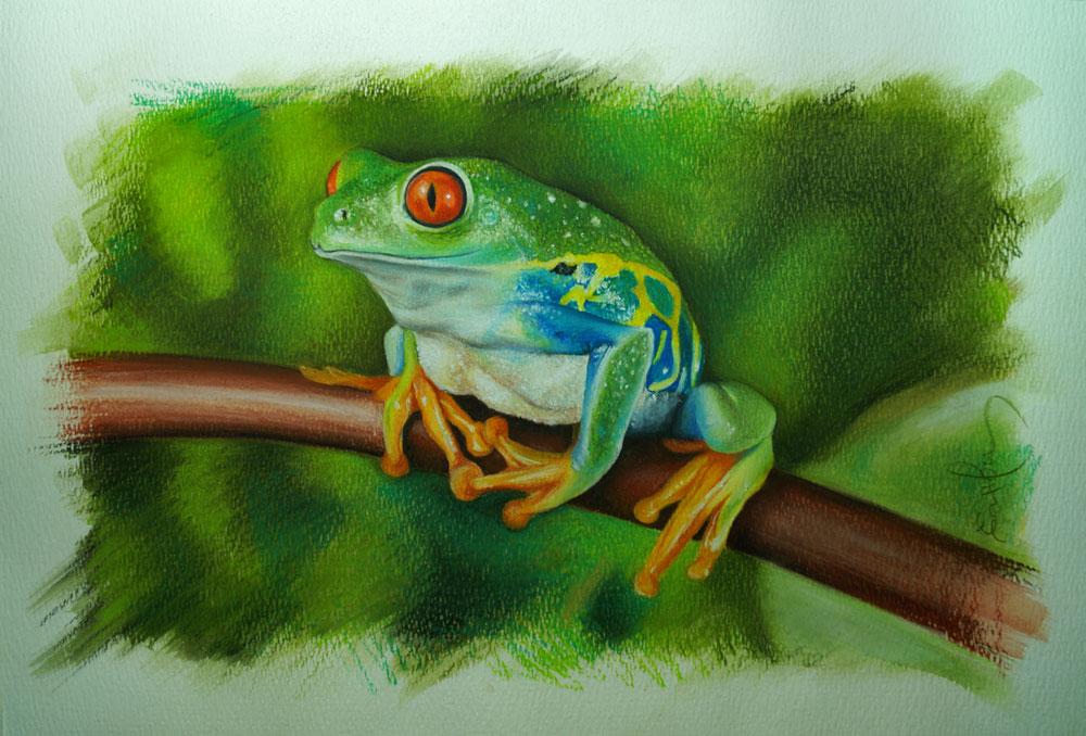 rana-dibujo-y-pintura-a-lapiz