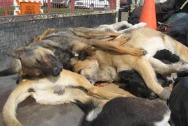 Declarações de Bispo provoca matança de cães