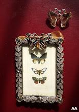 papillon envolé