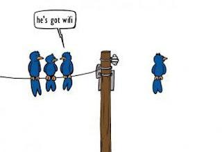 wifi birds