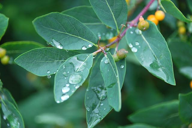 Макро капель дождя на листьях