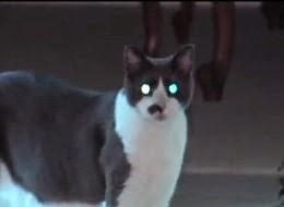 Kepelikan Melanda Bila Dua Beranak Jadi Tebusan Oleh Kucing Peliharaan Mereka