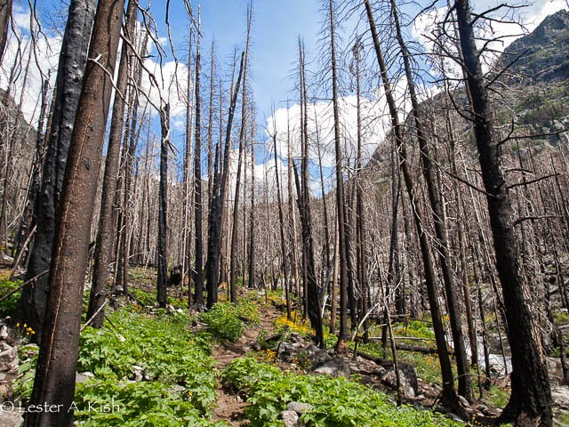 Tree skeletons along the Pine Creek trail near Livingston, Montana.