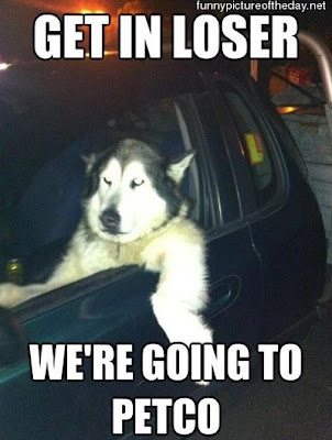 Get In Loser Funny Dog Driving Car