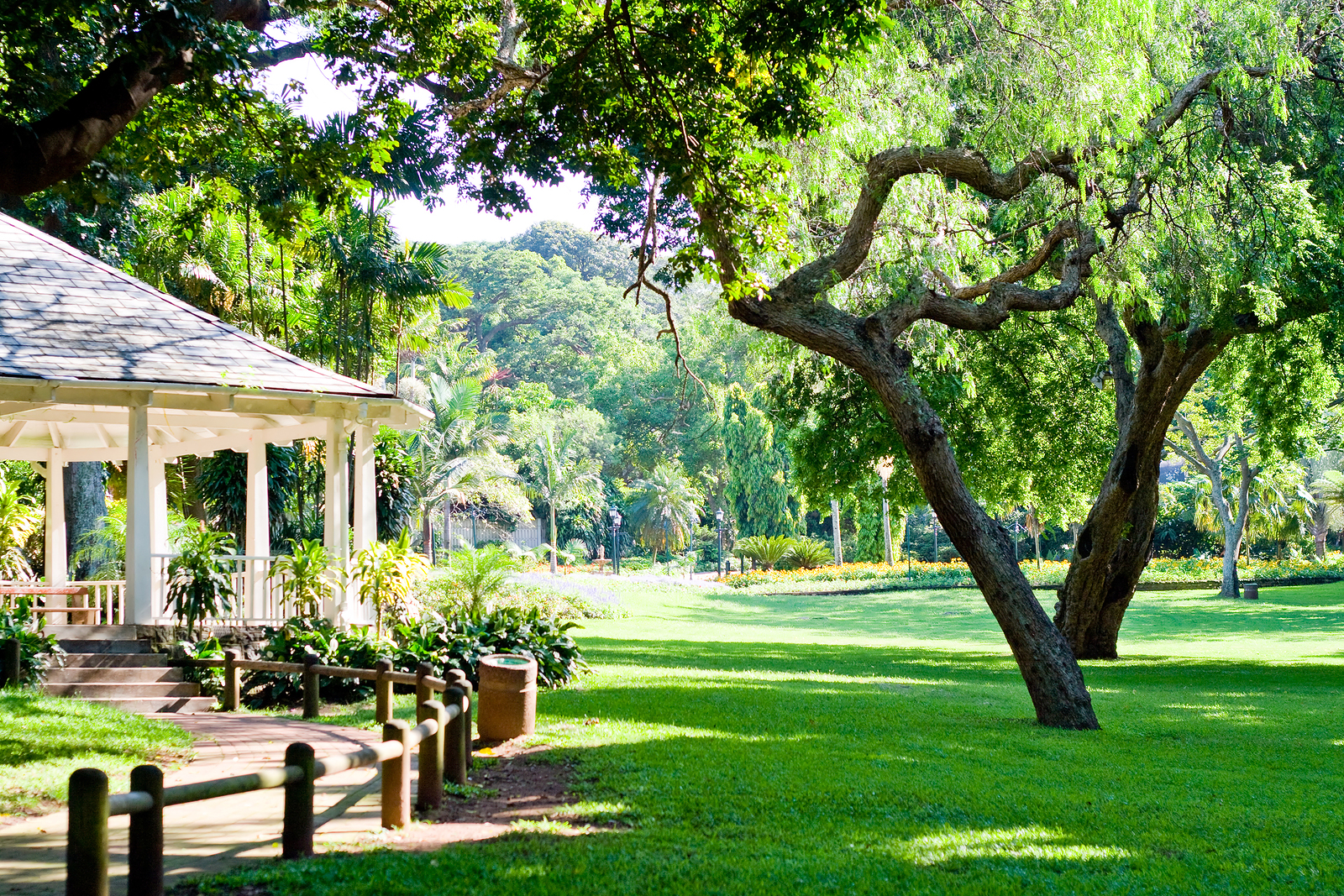 Arte y jardiner a arboles y arbustos para zonas sombr as for Jardines grandes
