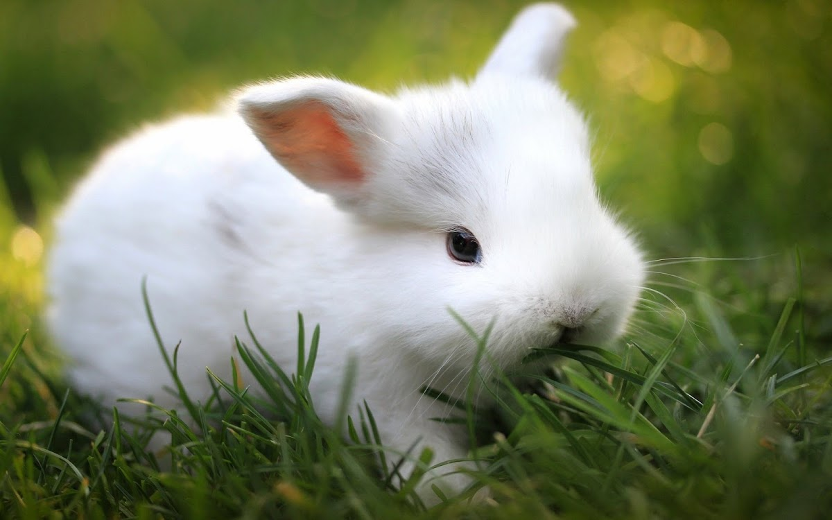 White Rabbit Baby Widescreen HD Wallpaper