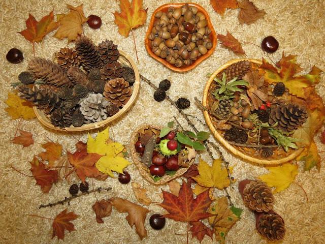 castane,conuri,ghinde,frunze uscate