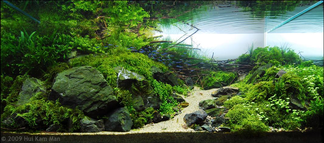 Aquascape Gallery ~