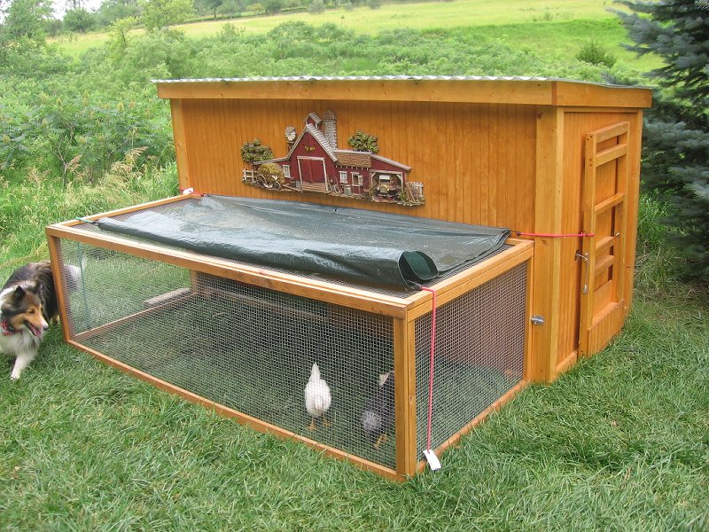 Chicken coop designs make a chicken coop for How to build a chicken hutch
