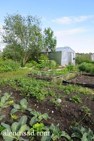 общий план, аленин сад