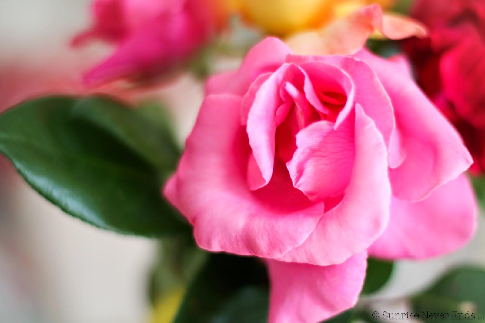 hone sweet home,fleurs,roses,couleurs,life's a beach,martin parr