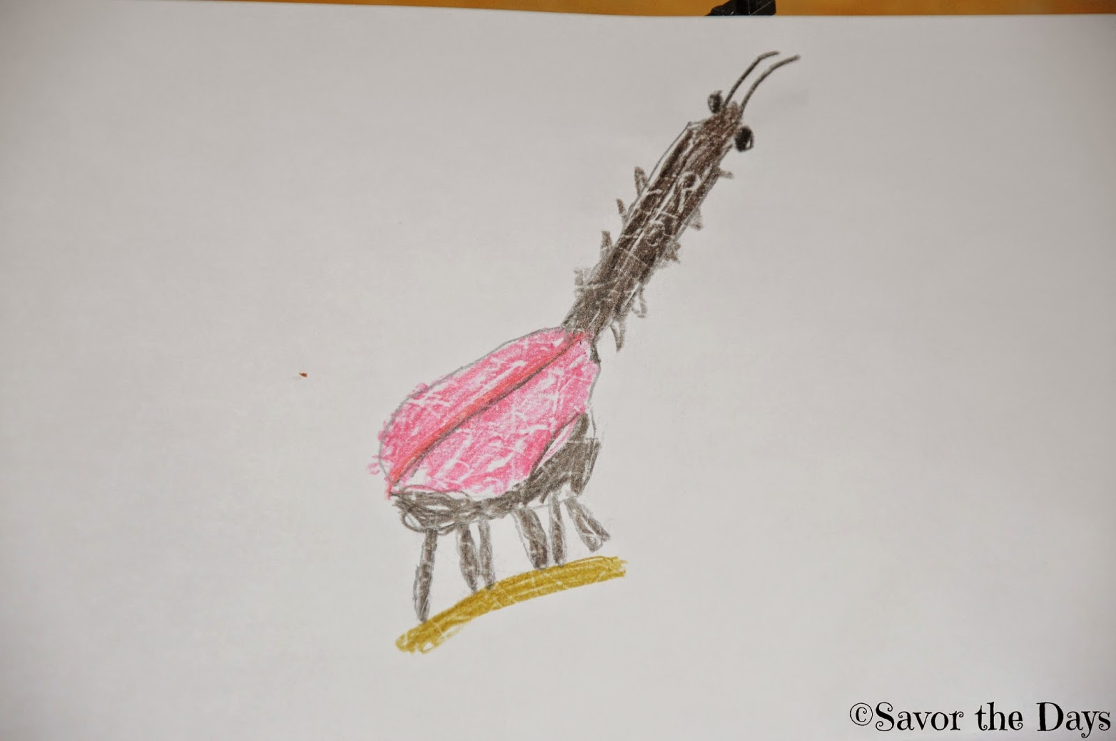Drawing of a giraffe weevil