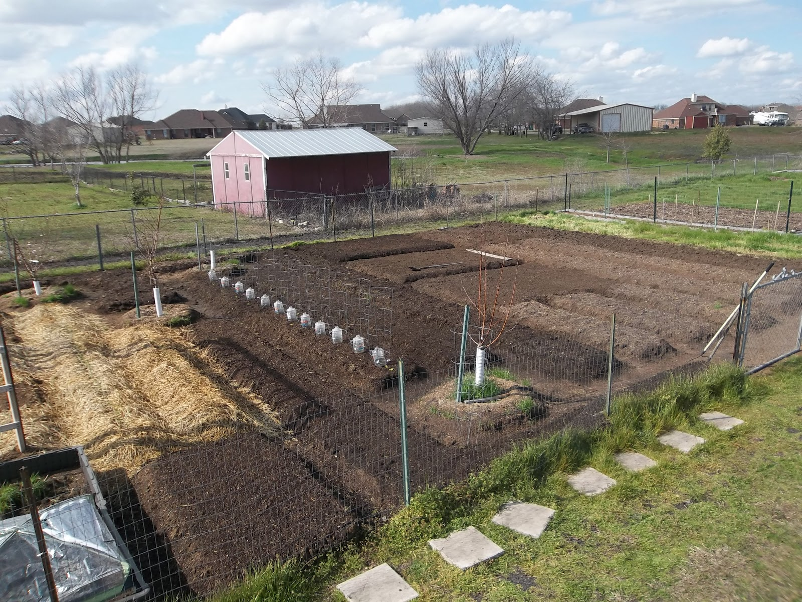 how to grow a vegetable garden in texas
