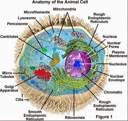 Bagian-bagian sel