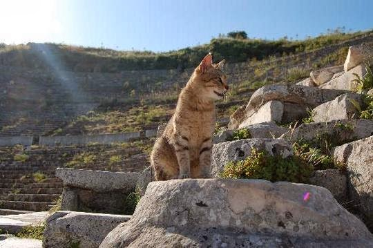 cat in Ephesus Turkey