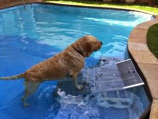 piscinas cães grandes