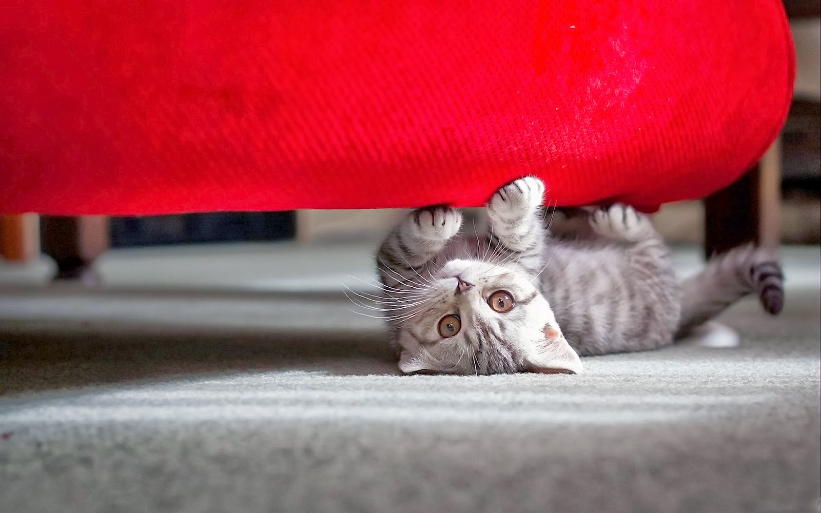 "<img src=""http://2.bp.blogspot.com/-CpWmBIynCG0/UtgFjW2O7oI/AAAAAAAAIRk/ya9UrY1dPbM/s1600/animal-wallpapers-cute-cat.jpg"" alt=""Animal wallpapers"" />"