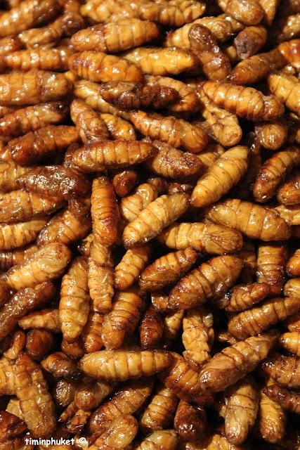 silkworm.5.JPG