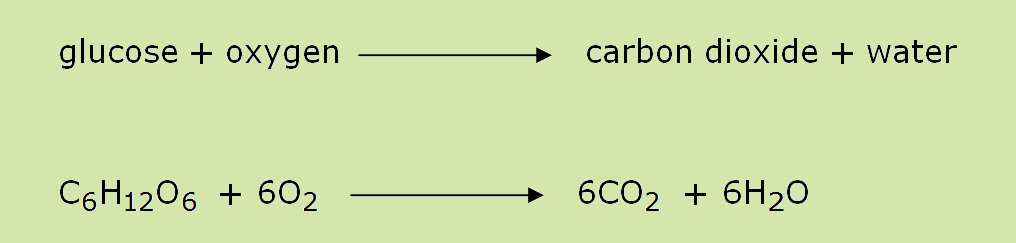 Cellular Respiration – contd Aerobic Respiration AND ...
