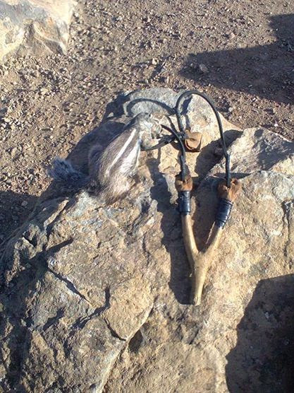 السنجاب البربري
