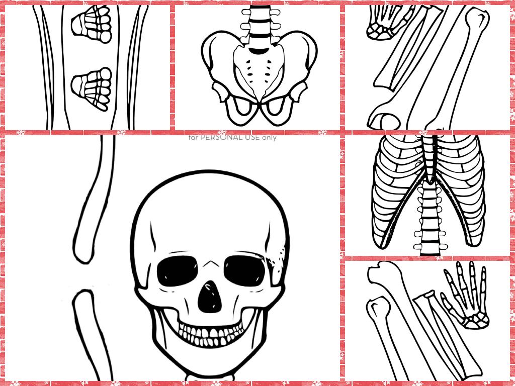 Esqueleto en tamaño real | aLeXduv3