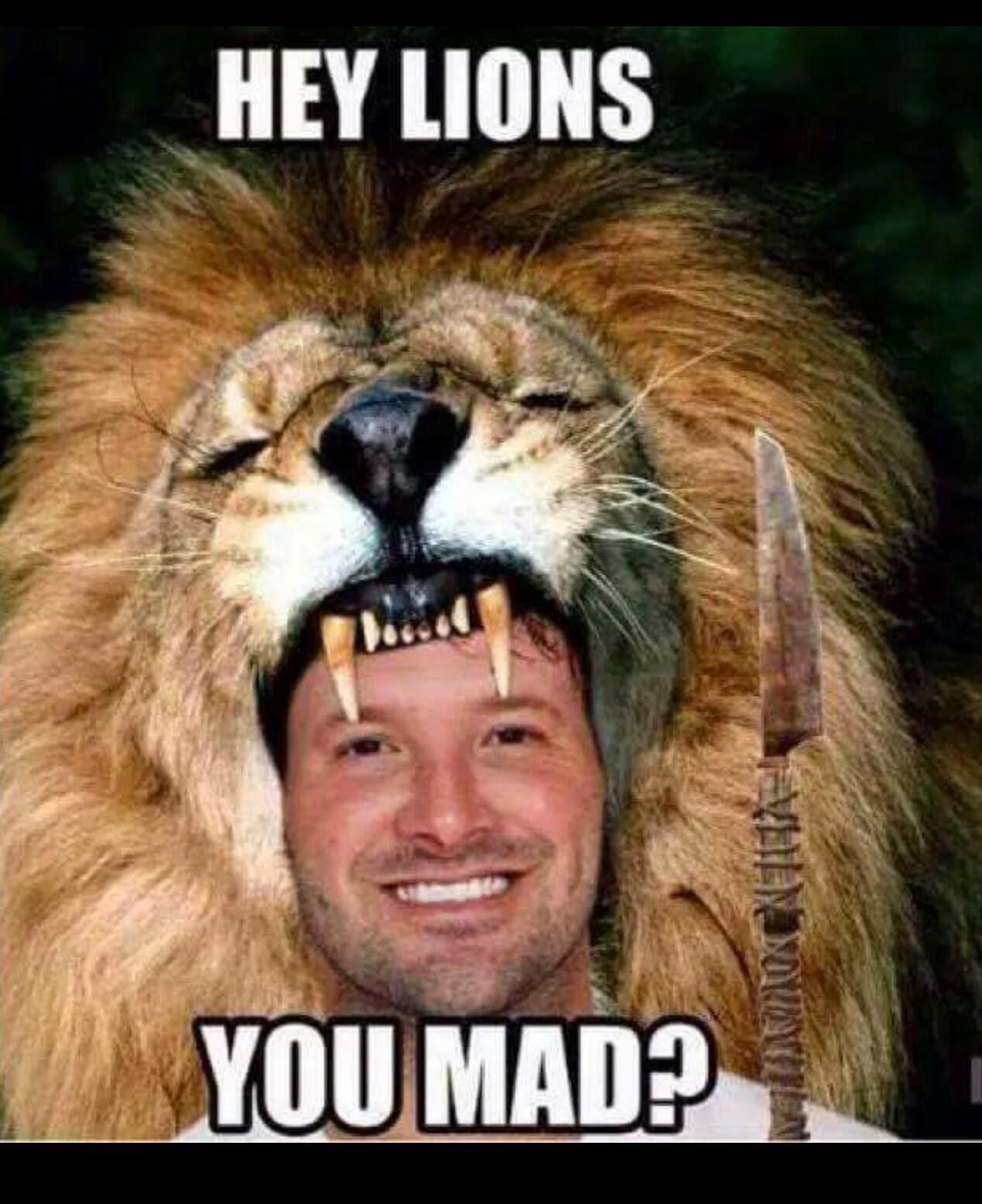 Hey Lions you mad?