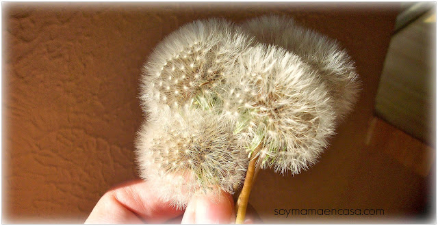 remedios caseros en temporada de alergias