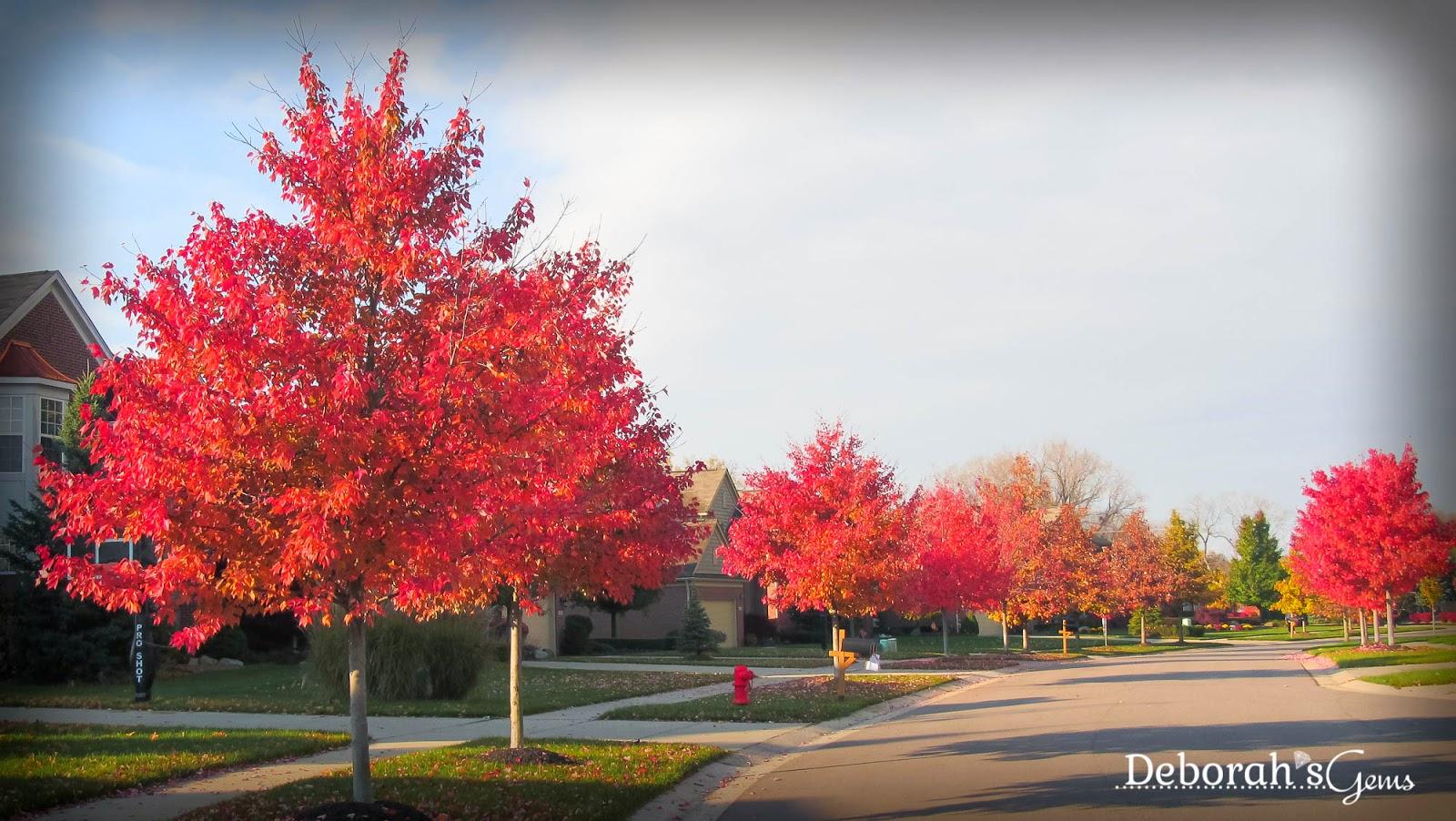 Autumn Glory 1 - photo by Deborah Frings - Deborah's Gems