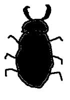 beetle, bug, stag beetle, insect