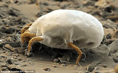 صور ميكروسكوبية مدهشة لكائنات تحتل منازلنا لكننا لا نستطيع أن نراها!