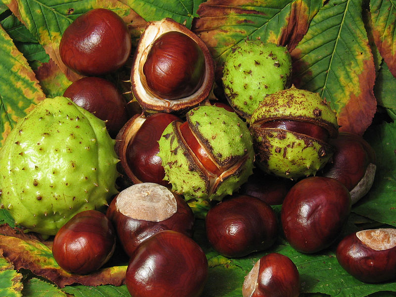 Bushmans Wild Hiking: Recepten: Tamme Kastanjes: bushmanswildhiking.blogspot.com/2012/11/recepten-tamme-kastanjes.html