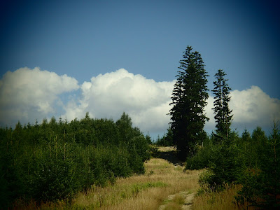 Orawa, Lipnica Wielka, Babia Góra, grzyby w sierpniu, grzybobranie na Orawie, grzybobranie w sierpniu
