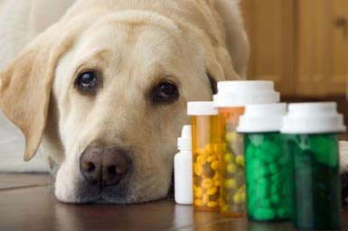 Dog Medicines Online, Dog Health care, Frontline Flea Control, Advantix flea Medication