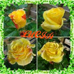 Min underbara ros