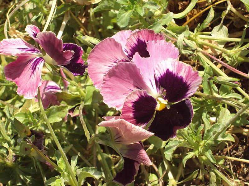 En torno al huerto plantas ornamentales for 20 plantas ornamentales