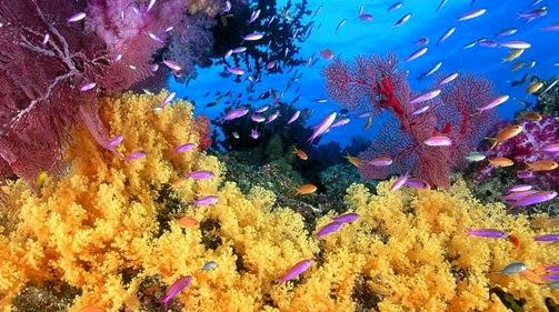 Pesona Bawah Laut Laut Pulau Rubiah
