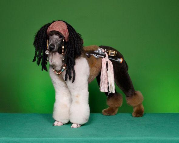 Ren Netherland fotografia animais estimação cães cachorros extreme pets fantasia Jack Sparrow